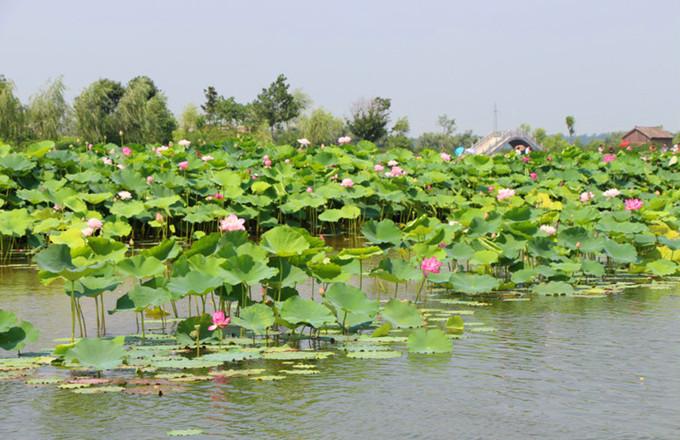 台儿庄运河湿地公园旅游特色