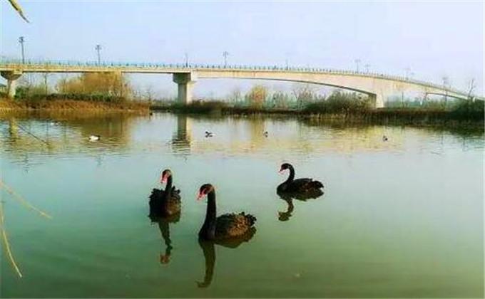 台儿庄双龙湖观鸟园