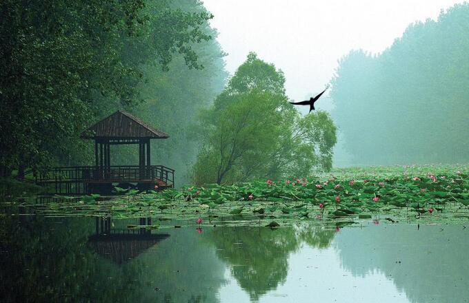台儿庄周边景点–微山湖红荷湿地