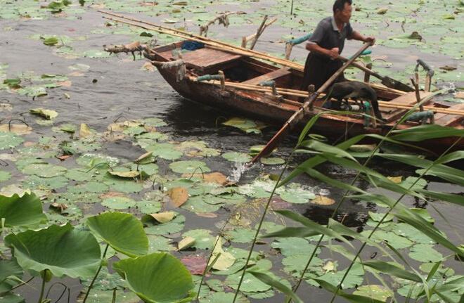 微山湖红荷湿地在哪, 微山湖红荷湿地好玩吗