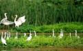 全面解读微山湖红荷湿地旅游攻略,自驾游攻略